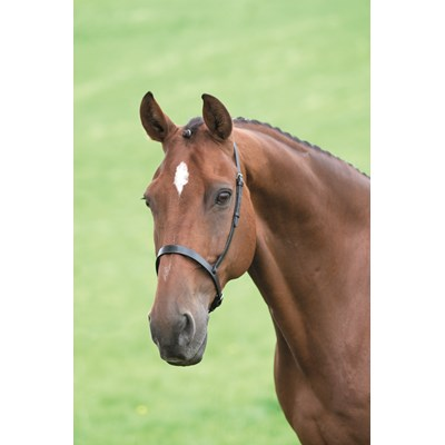 Shires Blenheim Cavesson Noseband