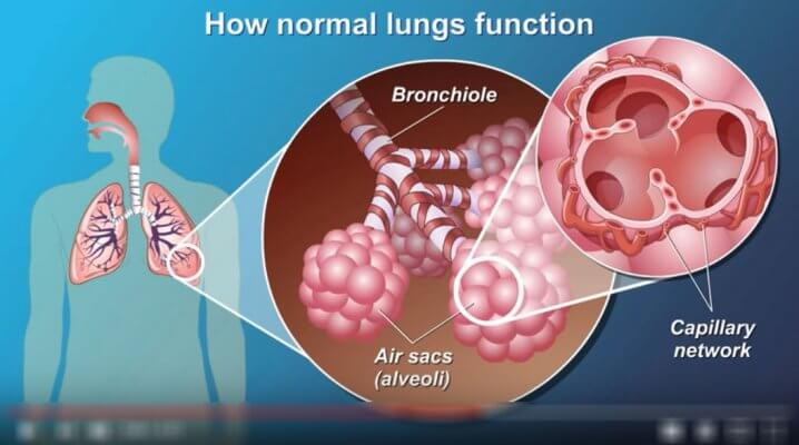 How normal lungs function