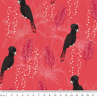 Outback Beauty: Black Cockatoo Beauty Red by Amanda Brandl for KK Designs