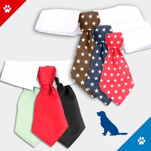 Pet tie collar - dog4shine