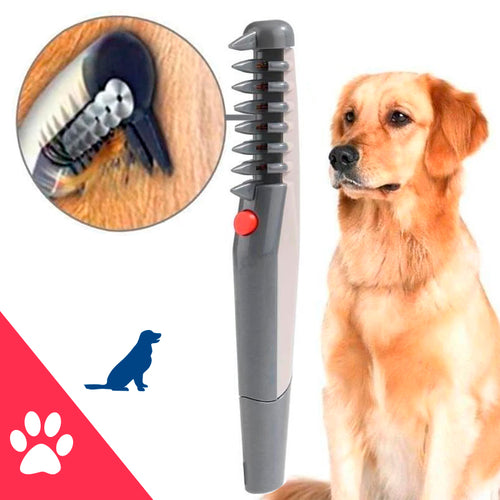 Electric comb to improve pets care haircut