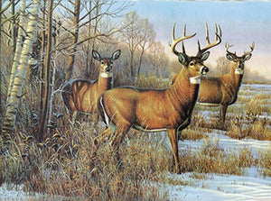 Buck Deer and Doe Paint by Diamonds