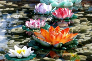 Colorful Lotus Flowers Diamond Painting Kit