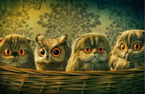 Funny Owl Basket Paint by Diamonds