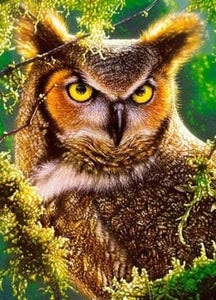 Gazing Owl Diamond Painting Kit