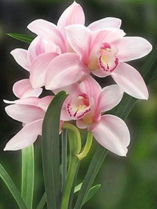 Lovely Pink Orchids Paint by Diamonds