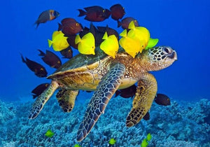 Sea Turtle & Fish Paint by Diamonds