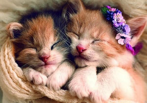 Sleeping Cute Kittens Paint by Diamonds