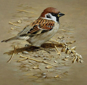 Sparrow Painting Kit