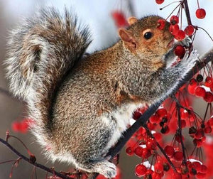 Squirrel on Tree Paint with Diamonds