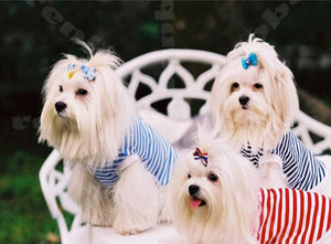 Cute Maltese Puppies Paint by Diamonds