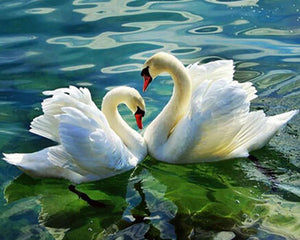 Swan Couple Diamond Painting