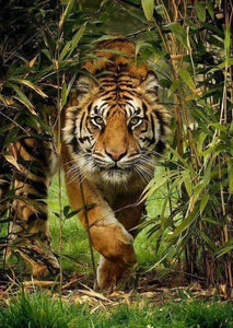 Tiger Running Out of Forest Diamond Painting