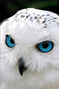 White Owl with Blue Eyes Diamond Painting