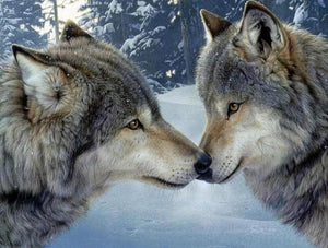 Wolves Pair in Snow Paint by Diamonds