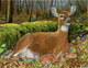 Deer DIY Diamond Paintings
