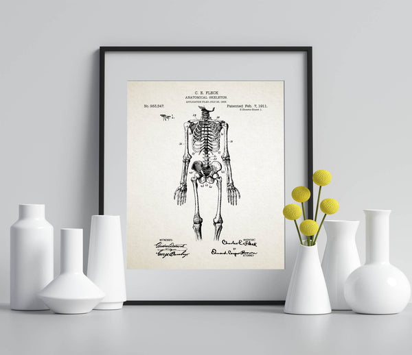 Anatomical Skeleton