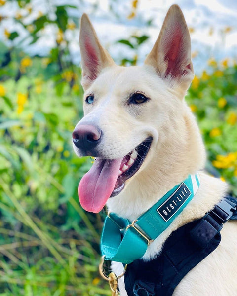 Real Teal - Martingale Collar