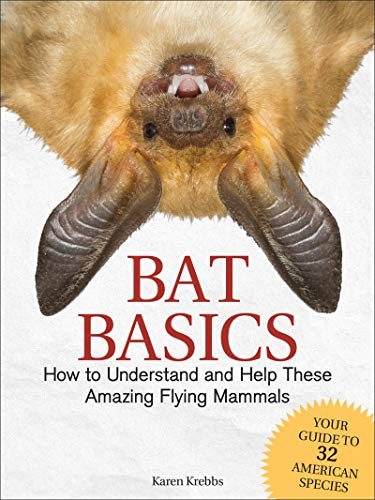 Bat Basics by Karen Krebbs