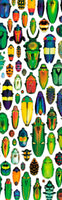 Bookmark Beetle Mosaic