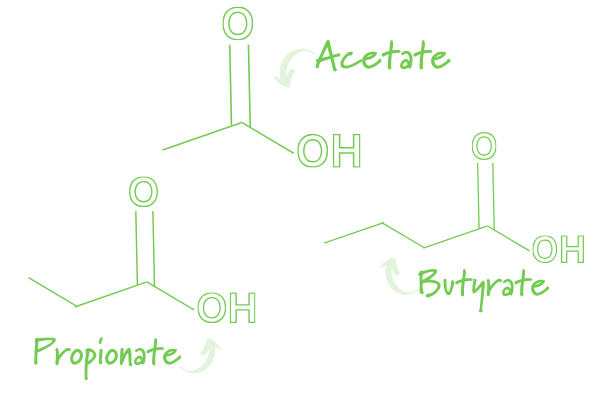 SCFAs Chemical Structure Acetate Propionate Butyrate