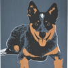Blue Heeler 2 Pack Tea Towels - Vault Country Clothing