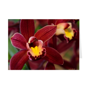 The photograph Orchids in Wine imprinted on a 5X7 greeting card with an unprinted interior.  These high quality paper cards come pre-folded, packed in cello sleeves per 10 cards, and includes a white envelope for each card. Works well with regular ballpoint pens after a short drying time.