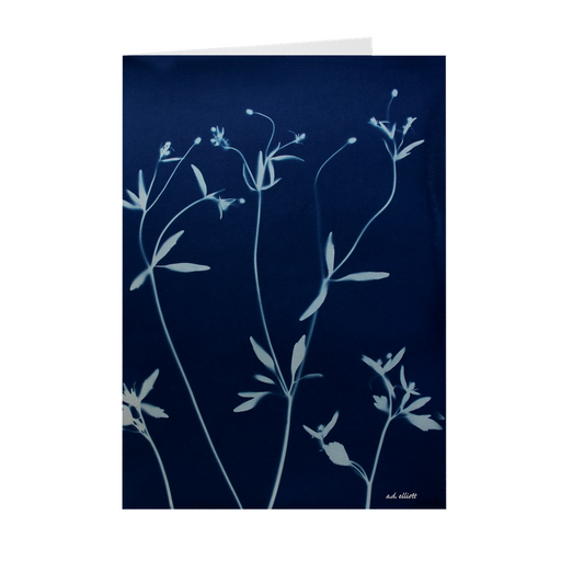 The cyanotype image CType 4920E imprinted on a greeting card with a blank interior.  These high-quality paper cards come pre-folded, packed in cello sleeves per 10 cards, and includes a white envelope for each card. Works well with regular ballpoint pens after a short drying time.