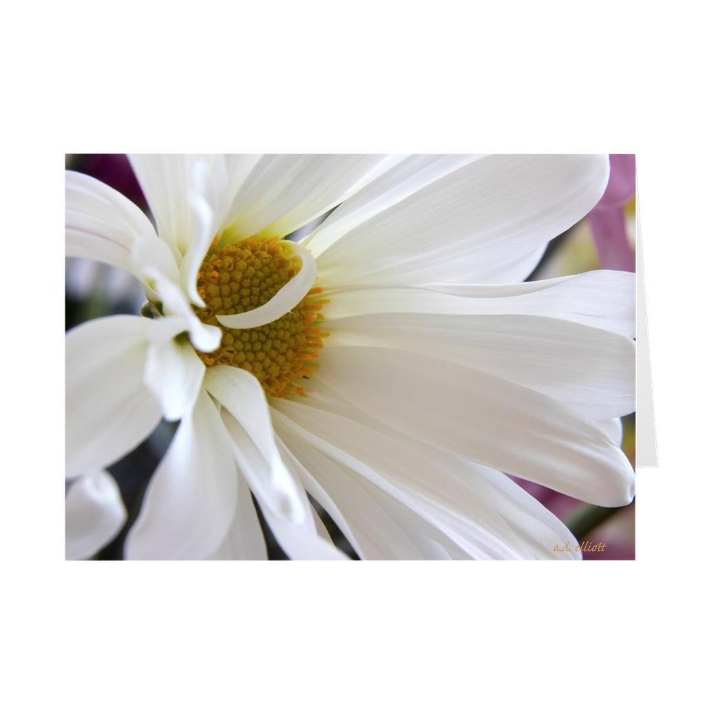 The photograph White Daisy imprinted on a 5x7 greeting card with an unprinted interior.  These high quality paper cards come pre-folded, packed in cello sleeves per 10 cards, and includes a white envelope for each card. Works well with regular ballpoint pens after short drying time.