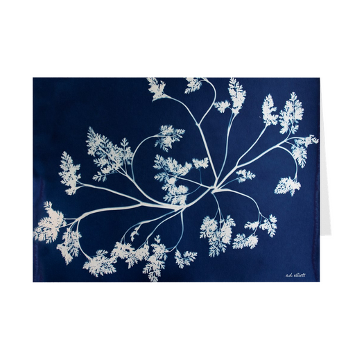 The cyanotype CType4920B imprinted on a 5X7 greeting card with a blank interior.  These high-quality paper cards come pre-folded, packed in cello sleeves per 10 cards, and includes a white envelope for each card. Works well with regular ballpoint pens after a short drying time.