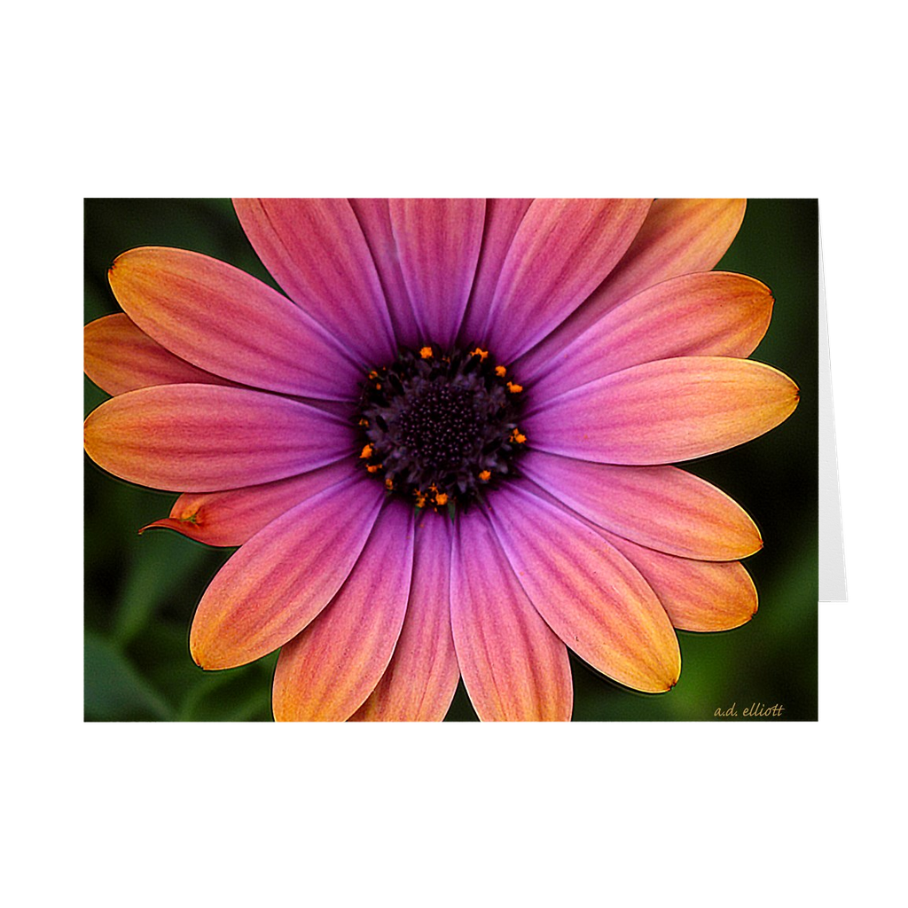 The photograph Daisy 2018 imprinted on a 5X7 greeting card with an unprinted interior.  These high-quality paper cards come pre-folded, packed in cello sleeves per 10 cards, and includes a white envelope for each card. Works well with regular ballpoint pens after a short drying time.