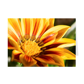 The photograph Yellow Daisy 2019 imprinted on a 5x7 greeting card with an unprinted interior.  These high-quality paper cards come pre-folded, packed in cello sleeves per 10 cards, and includes a white envelope for each card. Works well with regular ballpoint pens after a short drying time.