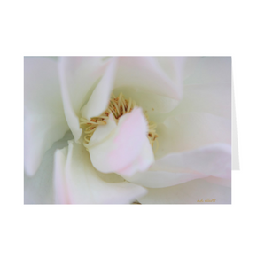 The photograph White Rose imprinted on a 5x7 greeting card with an unprinted interior.  These high-quality paper cards come pre-folded, packed in cello sleeves per 10 cards, and includes a white envelope for each card. Works well with regular ballpoint pens after a short drying time.