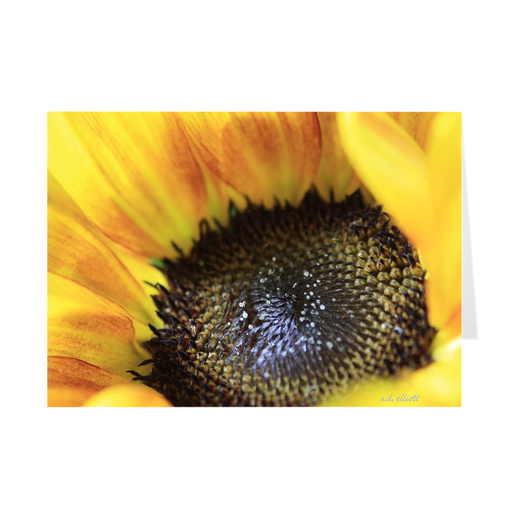 "The photograph ""Sunflower"" imprinted on a 5x7 greeting card with an unprinted interior.  These high-quality paper cards come pre-folded, packed in cello sleeves per 10 cards, and includes a white envelope for each card. Works well with regular ballpoint pens after a short drying time."