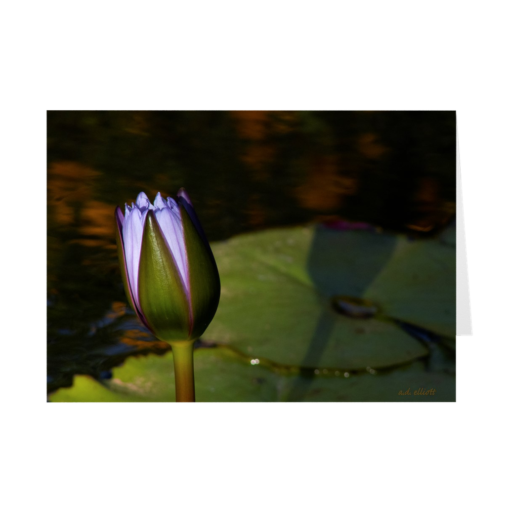 "The photograph ""Lotus Bud 2019"" imprinted on a 5x7 greeting card with an unprinted interior.  These high-quality paper cards come pre-folded, packed in cello sleeves per 10 cards, and includes a white envelope for each card. Works well with regular ballpoint pens after a short drying time."