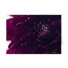 The photograph Purple Dahlia Dec 2019 imprinted on a 5X7 greeting card with an unprinted interior.  These high-quality paper cards come pre-folded, packed in cello sleeves per 10 cards, and includes a white envelope for each card. Works well with regular ballpoint pens after a short drying time.