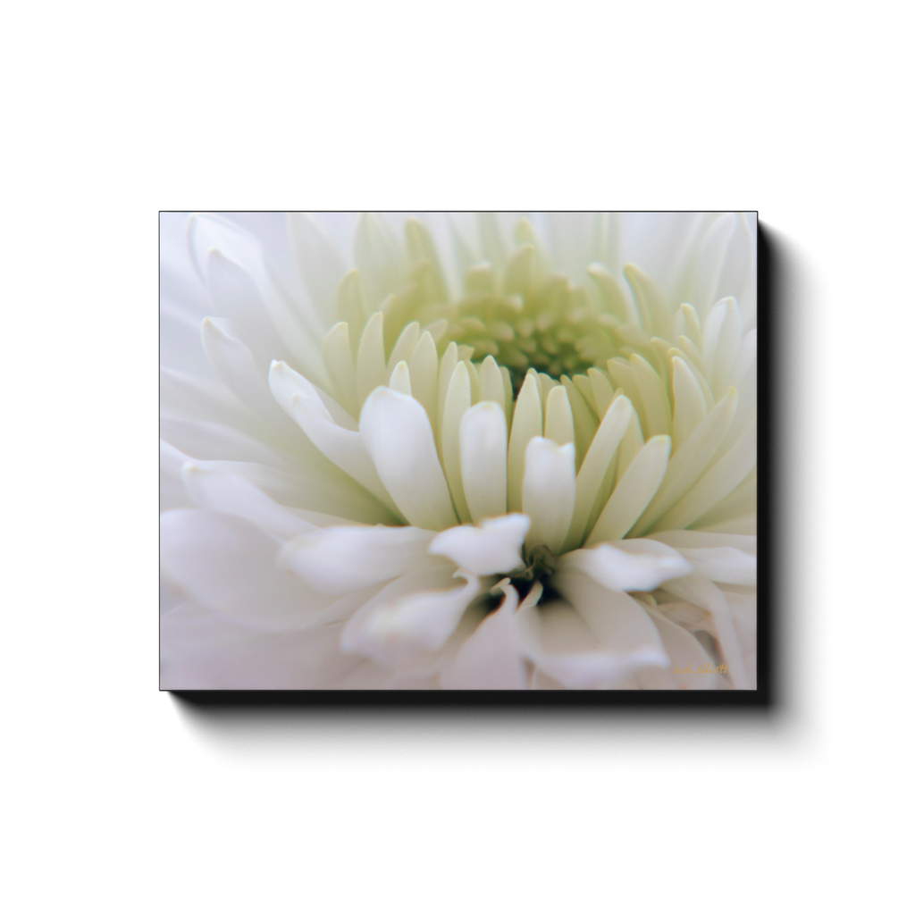 A macro photograph of a white dahlia with a yellow center. Taken by the photographer a.d. elliott  Printed on high quality, artist-grade stock and folded around a lightweight frame to give them a gorgeous, gallery ready appearance. With acid free ink that will last without fading or chipping, Features a scratch-resistant UV coating. Wipes clean easily with a damp cloth or to remove dust, vacuum gently using a soft brush attachment.