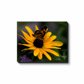A macro photograph of a butterfly on a Black-eyed Susan. Taken by the photographer a.d. elliott.  Printed on high quality, artist-grade stock and folded around a lightweight frame to give them a gorgeous, gallery-ready appearance. With acid-free ink that will last without fading or chipping, Features a scratch-resistant UV coating. Wipes clean easily with a damp cloth or to remove dust, vacuum gently using a soft brush attachment.