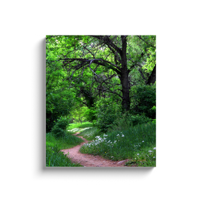 A photograph of a path in a forest taken by the. photograph a.d. elliott  Printed on high-quality, artist-grade stock and folded around a lightweight frame to give them a gorgeous, gallery-ready appearance. With acid-free ink that will last without fading or chipping, Features a scratch-resistant UV coating. Wipes clean easily with a damp cloth or to remove dust, vacuum gently using a soft brush attachment.