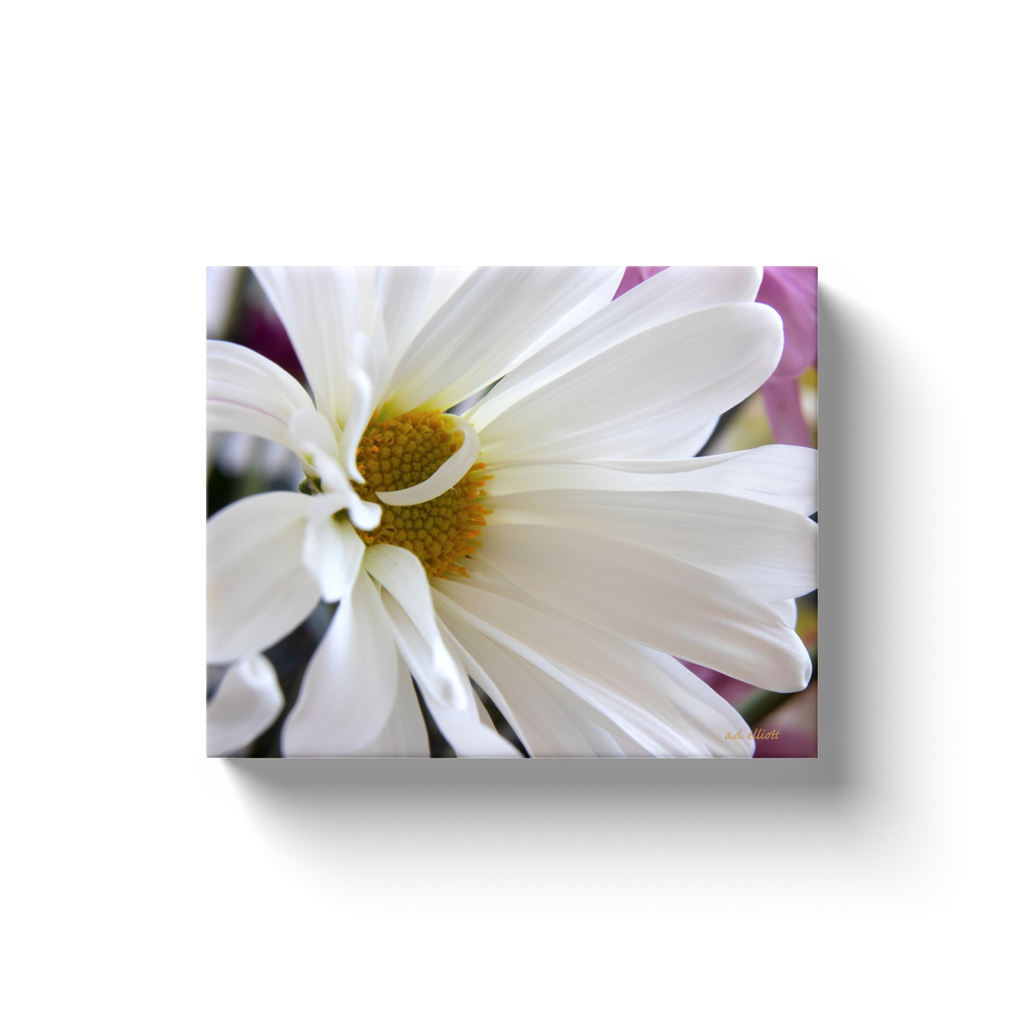 A macro photograph of a white daisy.  Printed on high quality, artist-grade stock and folded around a lightweight frame to give them a gorgeous, gallery-ready appearance. With acid-free ink that will last without fading or chipping, Features a scratch-resistant UV coating. Wipes clean easily with a damp cloth or to remove dust, vacuum gently using a soft brush attachment.