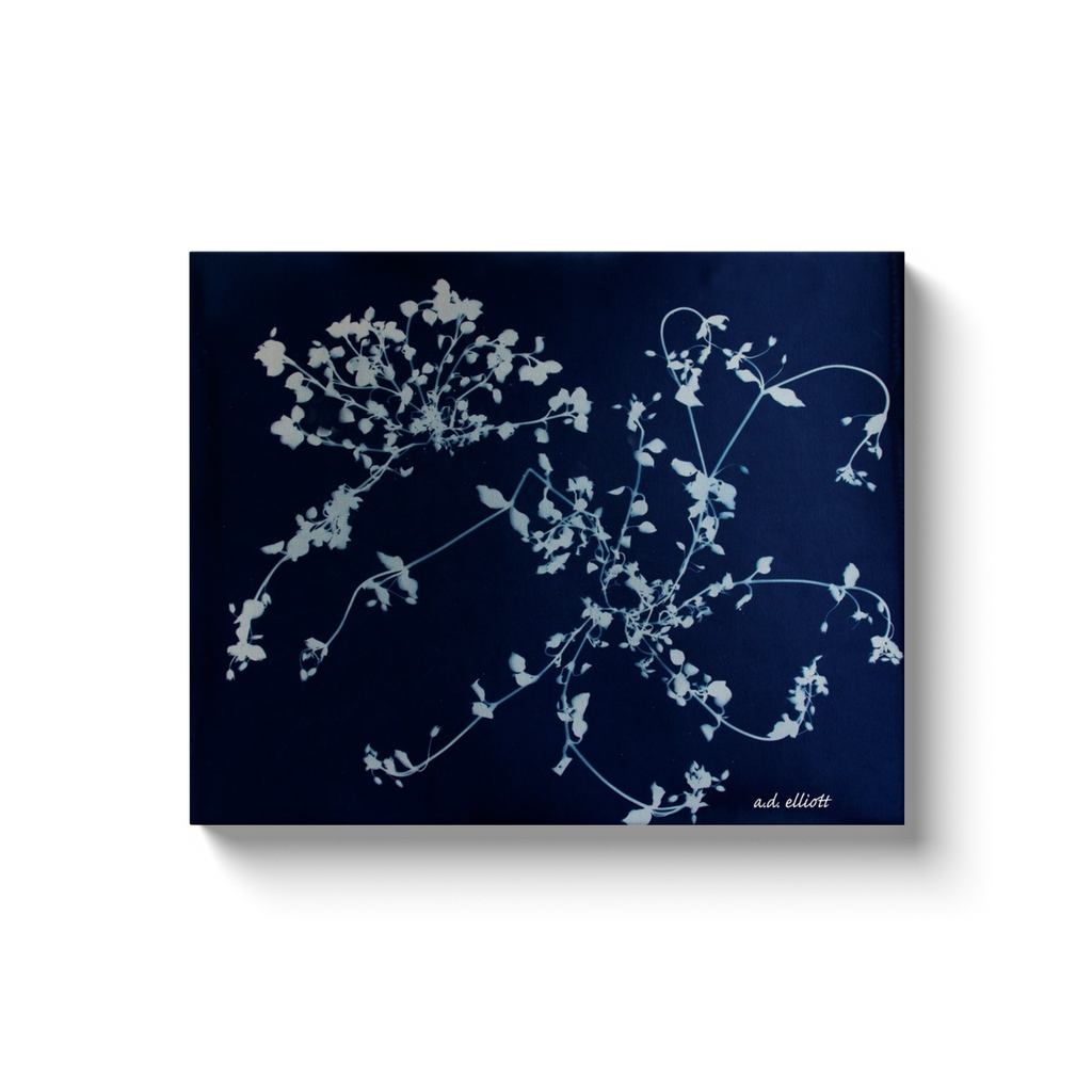 A cyanotype (blueprint) of wild grasses, taken by the Arkansas photographer a.d. elliott.  Printed on high quality, artist-grade stock and folded around a lightweight frame to give them a gorgeous, gallery-ready appearance. With acid-free ink that will last without fading or chipping, Features a scratch-resistant UV coating. Wipes clean easily with a damp cloth or to remove dust, vacuum gently using a soft brush attachment.