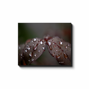 A macro photograph of raindrops on the leaves of a rose bush. Taken by the photographer a.d. elliott - Take the Back Roads #TaketheBackroads  Printed on high quality, artist-grade stock and folded around a lightweight frame to give them a gorgeous, gallery-ready appearance. With acid-free ink that will last without fading or chipping, Features a scratch-resistant UV coating. Wipes clean easily with a damp cloth or to remove dust, vacuum gently using a soft brush attachment.