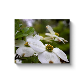 A macro photograph of white dogwood blossoms taken by the Arkansas photographer a.d. elliott.  Printed on high quality, artist-grade stock and folded around a lightweight frame to give them a gorgeous, gallery-ready appearance. With acid-free ink that will last without fading or chipping, Features a scratch-resistant UV coating. Wipes clean easily with a damp cloth or to remove dust, vacuum gently using a soft brush attachment.