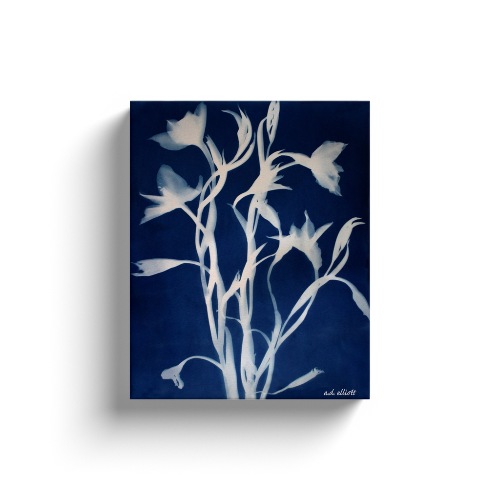 A cyanotype of wildflowers.  Printed on high quality, artist-grade stock and folded around a lightweight frame to give them a gorgeous, gallery-ready appearance. With acid-free ink that will last without fading or chipping, Features a scratch-resistant UV coating. Wipes clean easily with a damp cloth or to remove dust, vacuum gently using a soft brush attachment.
