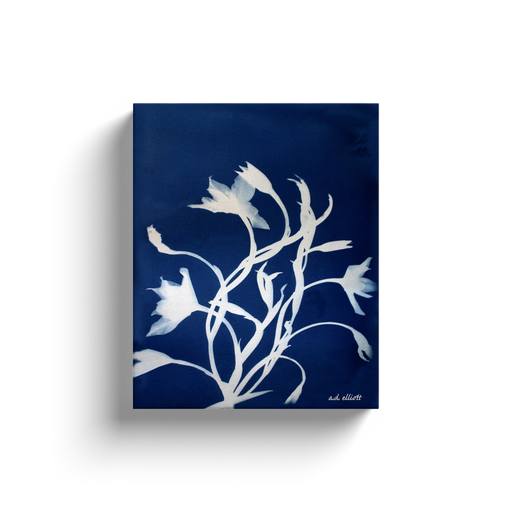 Cyanotype of Wildflowers.  Printed on high quality, artist-grade stock and folded around a lightweight frame to give them a gorgeous, gallery-ready appearance. With acid-free ink that will last without fading or chipping, Features a scratch-resistant UV coating. Wipes clean easily with a damp cloth or to remove dust, vacuum gently using a soft brush attachment.