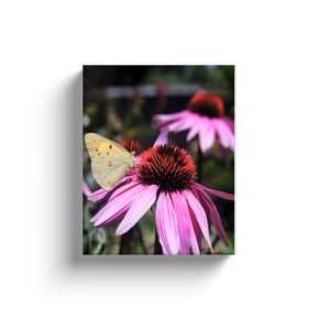 A macro photograph of coneflowers and moth taken by the photographer a.d. elliott.  Printed on high quality, artist-grade stock and folded around a lightweight frame to give them a gorgeous, gallery-ready appearance. With acid-free ink that will last without fading or chipping, Features a scratch-resistant UV coating. Wipes clean easily with a damp cloth or to remove dust, vacuum gently using a soft brush attachment.