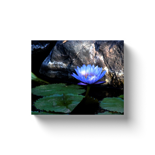 A macro photograph of a blue lotus.  Printed on high quality, artist-grade stock and folded around a lightweight frame to give them a gorgeous, gallery-ready appearance. With acid-free ink that will last without fading or chipping, Features a scratch-resistant UV coating. Wipes clean easily with a damp cloth or to remove dust, vacuum gently using a soft brush attachment.
