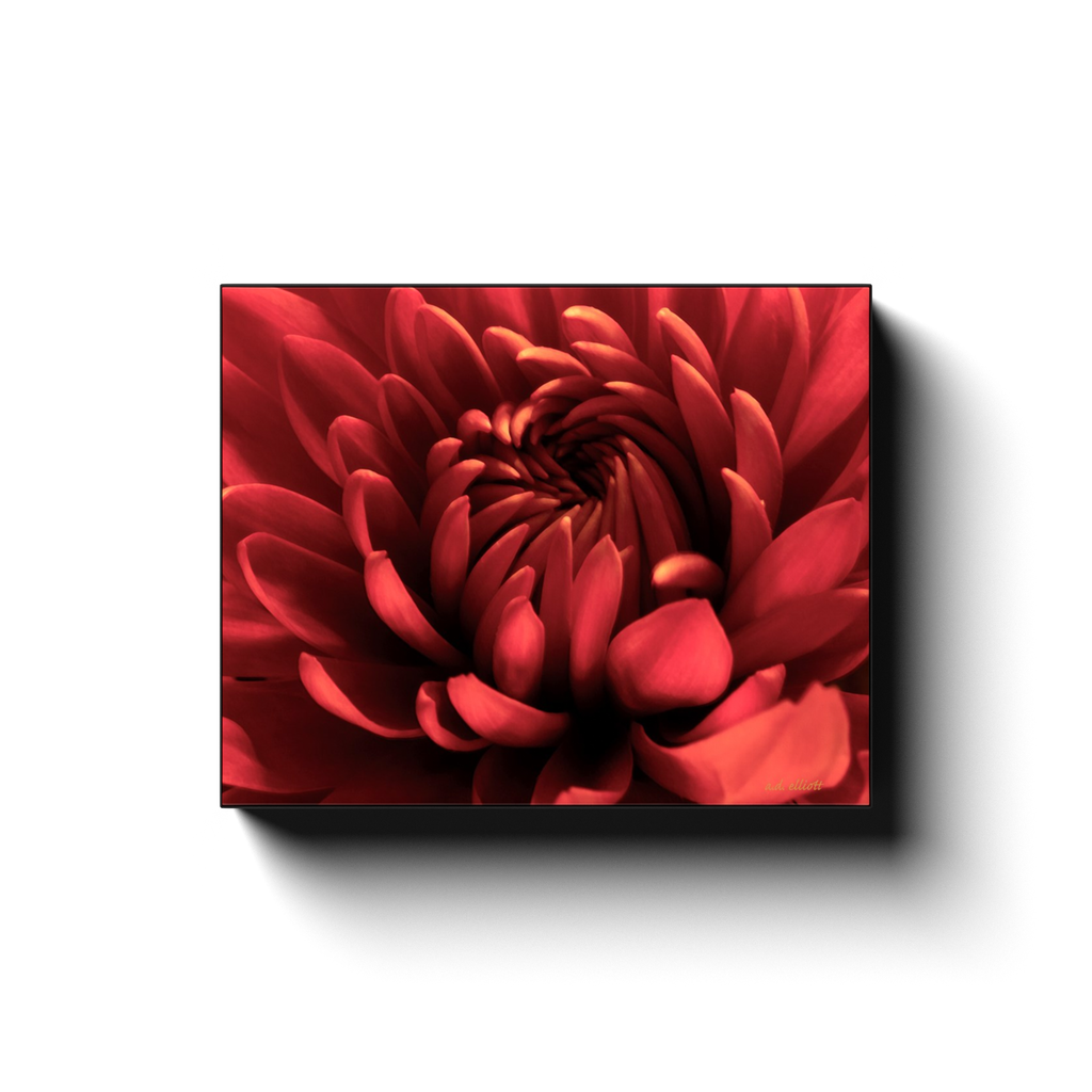 A macro photograph of a red chrysanthemum taken by the Arkansas photographer a.d. elliott #TaketheBackRoads  Printed on high quality, artist-grade stock and folded around a lightweight frame to give them a gorgeous, gallery-ready appearance. With acid-free ink that will last without fading or chipping, Features a scratch-resistant UV coating. Wipes clean easily with a damp cloth or to remove dust, vacuum gently using a soft brush attachment.