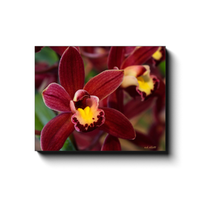 A macro photograph of wine colored orchids with a yellow throat. Taken by the nature photographer a.d. elliott  Printed on high quality, artist grade stock and folded around a lightweight frame to give them a gorgeous, gallery ready appearance. With acid free ink that will last without fading or chipping, Features a scratch-resistant UV coating. Wipes clean easily with a damp cloth or to remove dust, vacuum gently using a soft brush attachment.