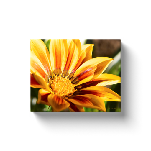 A macro photograph of a yellow daisy with deep orange colorations.  Printed on high-quality, artist-grade stock and folded around a lightweight frame to give them a gorgeous, gallery-ready appearance. With acid-free ink that will last without fading or chipping, Features a scratch-resistant UV coating. Wipes clean easily with a damp cloth or to remove dust, vacuum gently using a soft brush attachment.